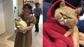 貓咪,喵星人,毛小孩,加菲貓,寵物,互動/翻攝自Dcard