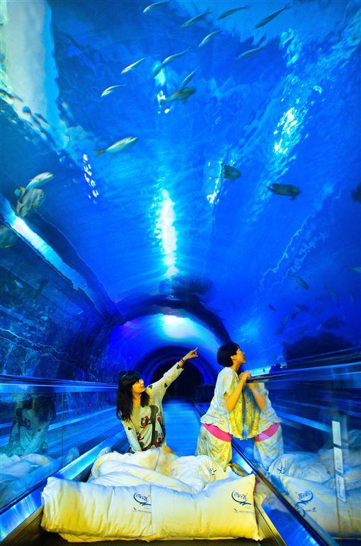 消暑玩法!夜宿海生館推出加值體驗 走入自然認識海洋