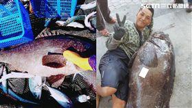 龍膽石斑被莫拉克颱風「野放」 8年竟長到「跟人一樣高」 合成圖/三和定置漁場提供