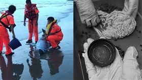 保育類糙齒海豚擱淺、死亡小海豚解剖/翻攝畫面、翻攝海洋公民基金會臉書