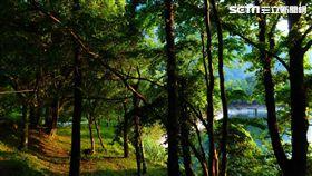 奧萬大森林遊樂區(圖/南投林管處提供)
