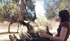 媽媽慘遭獵殺…犀牛寶寶住孤兒院 「一頭栽」跟保育員撒嬌(圖/翻攝自Caters Clips YouTube)