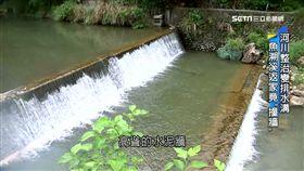 整治河川生態變樣! 魚溯溪