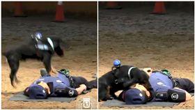 警犬,狗,心肺復甦術,CPR,救援(圖/翻攝自推特Policía de Madrid)