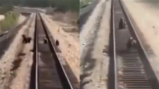 俄羅斯,薩哈共和國,母熊,小熊,火車,輾斃(圖/每日郵報)