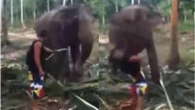 影/騷擾大象進食…白目男慘遭「象鼻」打飛 圖/翻攝youtube