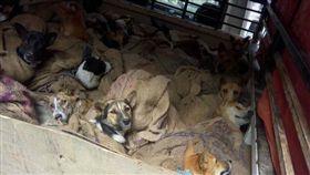 印度,非法,狗場,販賣,動保團體(圖/翻攝自臉書Humane Society International-India)