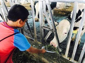 「偏鄉教室營養補充包計畫」舉辦營養知識小達人夏令營,帶偏鄉學童走入牧場,實地了解食品從牧場到餐桌的過程(圖為林鳳營透明牧場)/味全公司提供