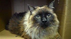 史上最胖流浪貓!收容所員工全看傻眼 (圖/翻攝自Pasadena Humane Society & SPCA臉書)