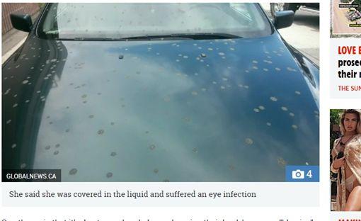 加拿大,2個月,排泄物,糞便雨,弄髒,汽車,加拿大雁(圖/翻攝自英國《太陽報》)
