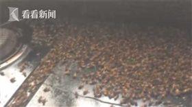 大陸河南一家遭蜜蜂闖入(圖/翻攝自網易)