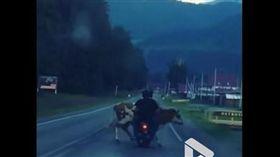 俄羅斯醉男衝撞母牛。(圖/翻攝自ViralVideoUK YouTube)