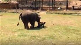 大象,泰國,忠誠,飼養員,保護 圖/翻攝自網路 http://www.sohu.com/a/239166694_162522
