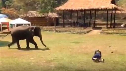 大象,泰國,忠誠,飼養員,保護圖/翻攝自網路http://www.sohu.com/a/239166694_162522