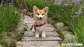 最新調查指出,逾6成家犬未定期投藥暴露於犬心絲蟲與寄生蟲高風險。(圖/公關照)