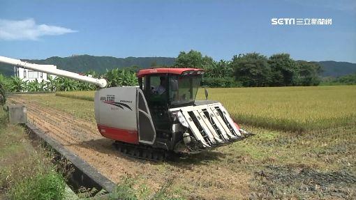 花蓮富里鄉引進日本牛奶皇后米花蓮縣富里鄉是台灣稻米重鎮,農會求新求變,從日本引進「牛奶皇后」品種水稻種植,試市場接受度,盼能助農民收穫豐碩。中央社記者李先鳳攝 107年4月5日