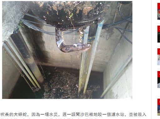 馬來西亞,大蟒蛇,濾水站,輸水管,水災(圖/翻攝自馬來西亞《中國報》)