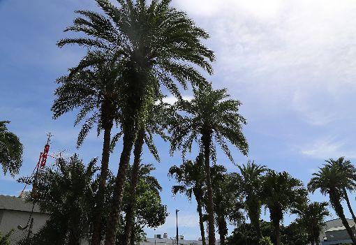 強颱瑪莉亞逼近 花蓮吹焚風爆熱中央氣象局花蓮氣象站主任譚廉表示,強颱瑪莉亞接近北台灣,花蓮地處背風面,10日豔陽高照,且受到西南風過山沉降增溫影響,天祥地區在上午11時更一度測得高溫攝氏37.2度,加上濕度低,已有焚風現象。中央社記者李先鳳攝 107年7月10日