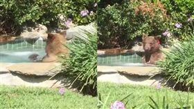 美國,棕熊,按摩池,泡澡,享受,喝酒,Altadena,Mark Hough,雞尾酒,熊熊遇見你,We Bare Bears 圖/翻攝自YouTube https://goo.gl/5oekXT