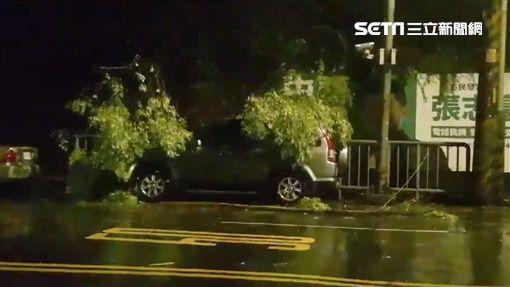 瑪莉亞,颱風,路樹,新北市,台北市(翻攝畫面)