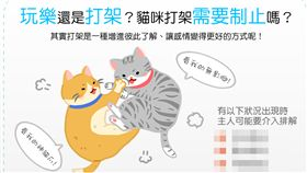 名家/毛起來/玩樂還是打架?貓咪互毆要阻止嗎?