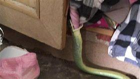 不舒服...目擊樹蛇吞睡衣 男從蛇嘴慢慢拉出來(圖/翻攝自dailymail http://www.dailymail.co.uk/news/article-5940553/Moment-snake-caught-trying-swallow-womans-pink-nightie.html)