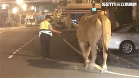 大黃牛,蹺家,逛大街,員警,報案,安置,牛肉湯,飼主,台南