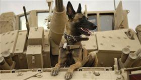 比利時瑪連萊犬、軍犬(示意圖/翻攝自Pixabay)