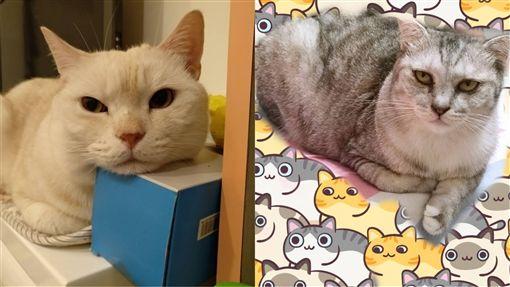 貓咪,貓奴,臭臉,大叔,爆怨公社(圖/翻攝自爆怨公社)