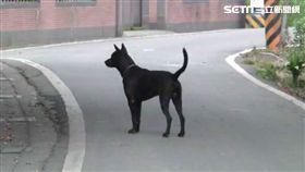 野狗、小狗、黑狗、閃狗