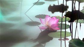 「荷詩對話~~吳景騰追荷攝影展」引領民眾思考「人生為荷」。(圖/吳景騰攝影)