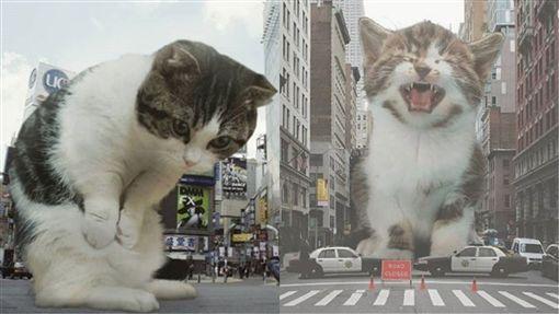 欺負,貓,喵星人,照片,毀滅,地球,小孩,欺騙,P圖,修圖 圖/翻攝自爆怨公社