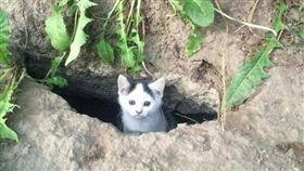 擋不住的眼神攻勢!流浪小貓贏得一餐 次日竟「力道加倍」(圖/翻攝自gag4today)流浪貓,餵食,呼朋引伴,洞穴
