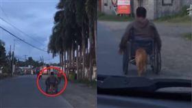 狗狗幫主人推輪椅/Viral Press YouTube