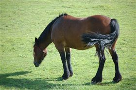 -馬-馬匹-▲圖/攝影者Dees Chinniah, flickr CC License(https://www.flickr.com/photos/cyberdees/3735967340/)