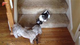 汪星人成功下樓梯,寵物成員們開心圍上去。