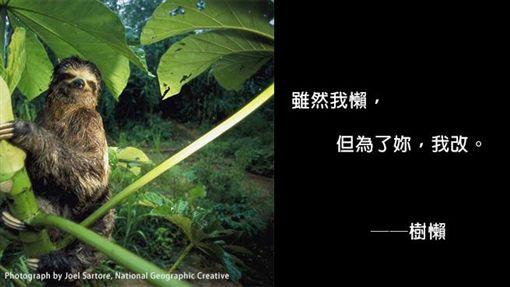 野生動物撩妹金句(圖/翻攝自國家地理雜誌臉書)