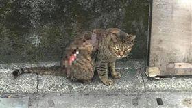 台北,動保法,腐蝕藥劑,潰爛,街貓,TNR。翻攝畫面