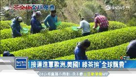 美搶喝綠茶1800