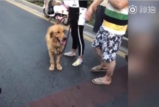 藍寶堅尼被黃金獵犬衝撞毀損。翻攝自《梨視頻》