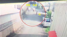 台南,女童,黑狗,監視器,奔跑,很乖,不吠