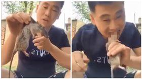 中國大陸網紅「旋瘋歐巴」生吃死老鼠(圖/翻攝自YouTube)