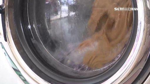 專用洗衣機+即時曬乾 內褲.襪子可一起洗