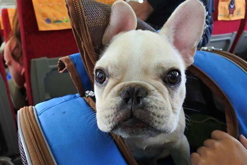 愛犬遭「烘死」 寵物店:要告去告台中,寵物店,寵物美容,法鬥,Dcard,烘箱,熱衰竭https://www.dcard.tw/f/pet/p/229291473