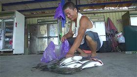 海釣場很夯,海釣場,高級魚種,回收價,龍膽石斑,烤魚