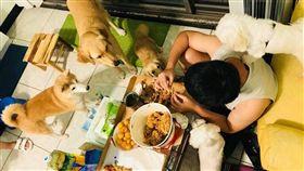 吃個炸雞壓力山大!五隻餓狗虎視眈眈 都爬到頭上了吃個 (圖/翻攝自有點毛毛的 臉書) 炸雞,比薩,餓狗,壓力,目光
