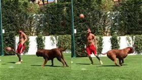 當梅西的狗真慘!想玩球…完全碰不到 足球,西甲,巴塞隆納,阿根廷,梅西,寵物,波爾多獒犬 https://www.youtube.com/watch?v=r9KNHlSleFc