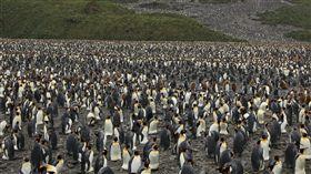 冷氣關掉!國王企鵝數量呈滅絕式暴跌 科雄島,Ile aux Cochons,國王企鵝,全球暖化,冷氣,滅絕 https://flic.kr/p/9HpUMi (圖/攝影者Liam Quinn, Flickr CC License)