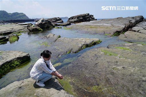 漁港,正濱漁港,八斗子漁港,碧砂漁港,海鮮,和平島,盤子