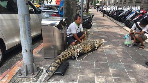 阮男帶鱷魚前去行政院抗議(翻攝畫面)
